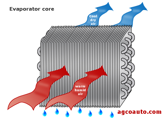 The evaporator core removes heat and humidity
